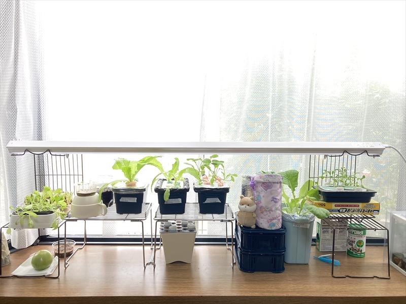 水耕栽培が並ぶ窓辺